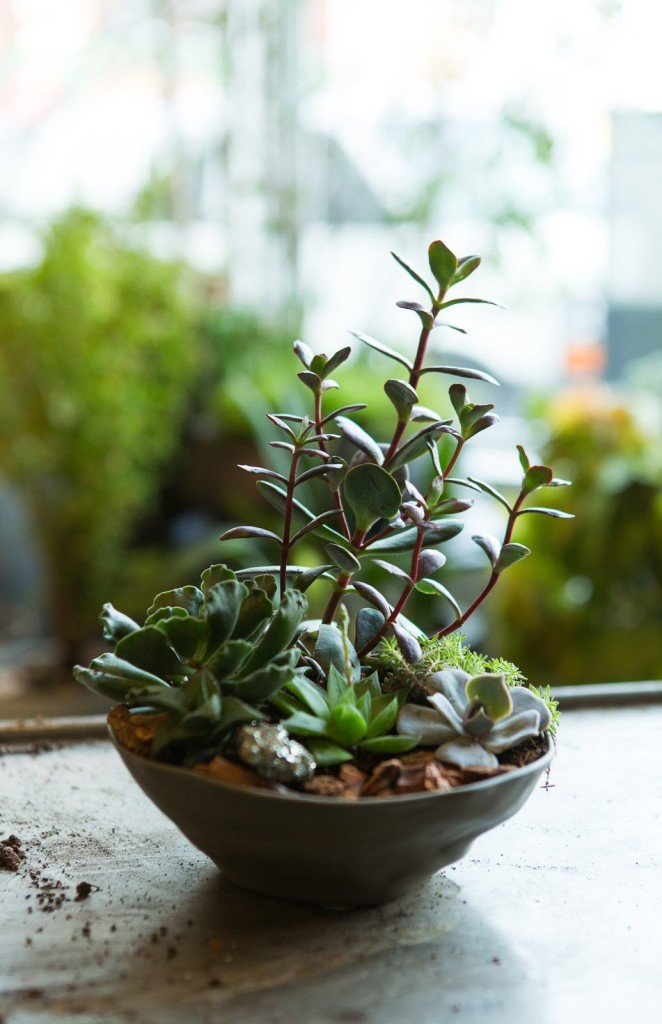 4 diy indoor gardens that are amazingly easy to make for Indoor gardening made easy