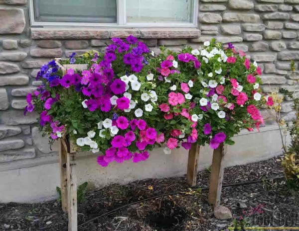 Build Your Own DIY Cascading Flower Planter Box With This Tutorial!